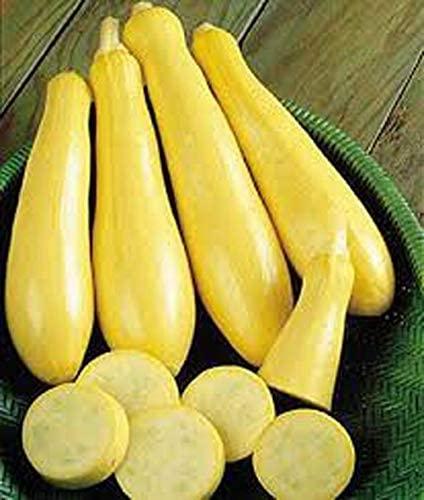 Squash, Early Prolific Straightneck Squash Seed, Organic, Non-GMO, 25 Seeds per