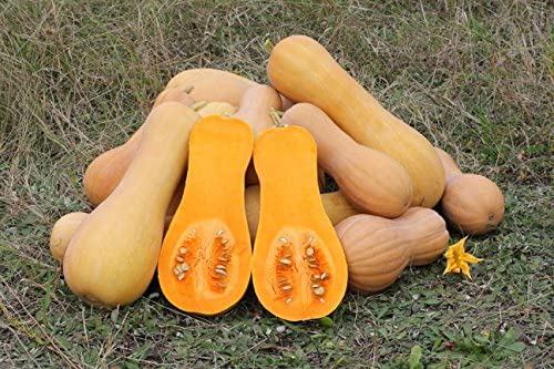 Squash Seeds - Butternut Squash - Heirloom - Liliana's Garden