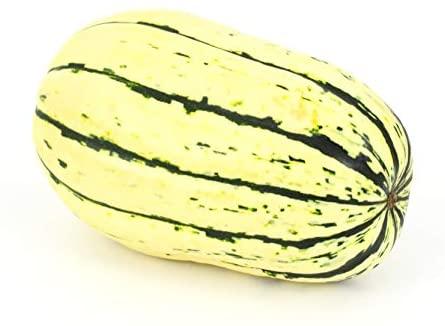 Winter Squash Delicata Squash Seeds - Non-GMO - 5 Grams